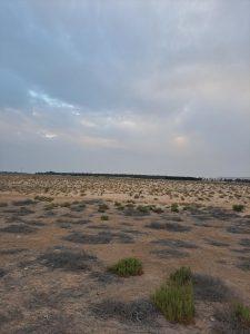 ارض زراعية للبيع في الاحساء